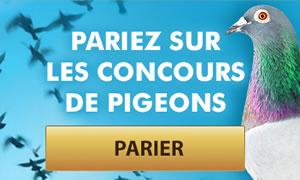 Les paris en ligne sur des courses de pigeons débarquent en Belgique
